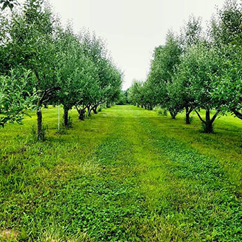 gardeners orchard